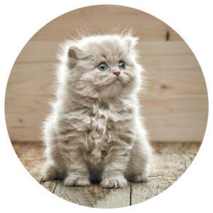 Muurcircel_Huisdier_Kitten_-optimized.jpg