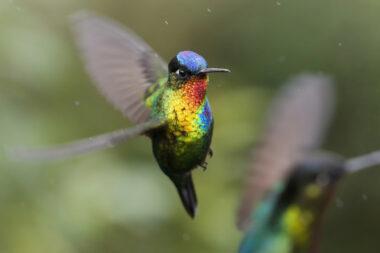 Colibrie-vrijvliegend-goudkleurig.jpeg